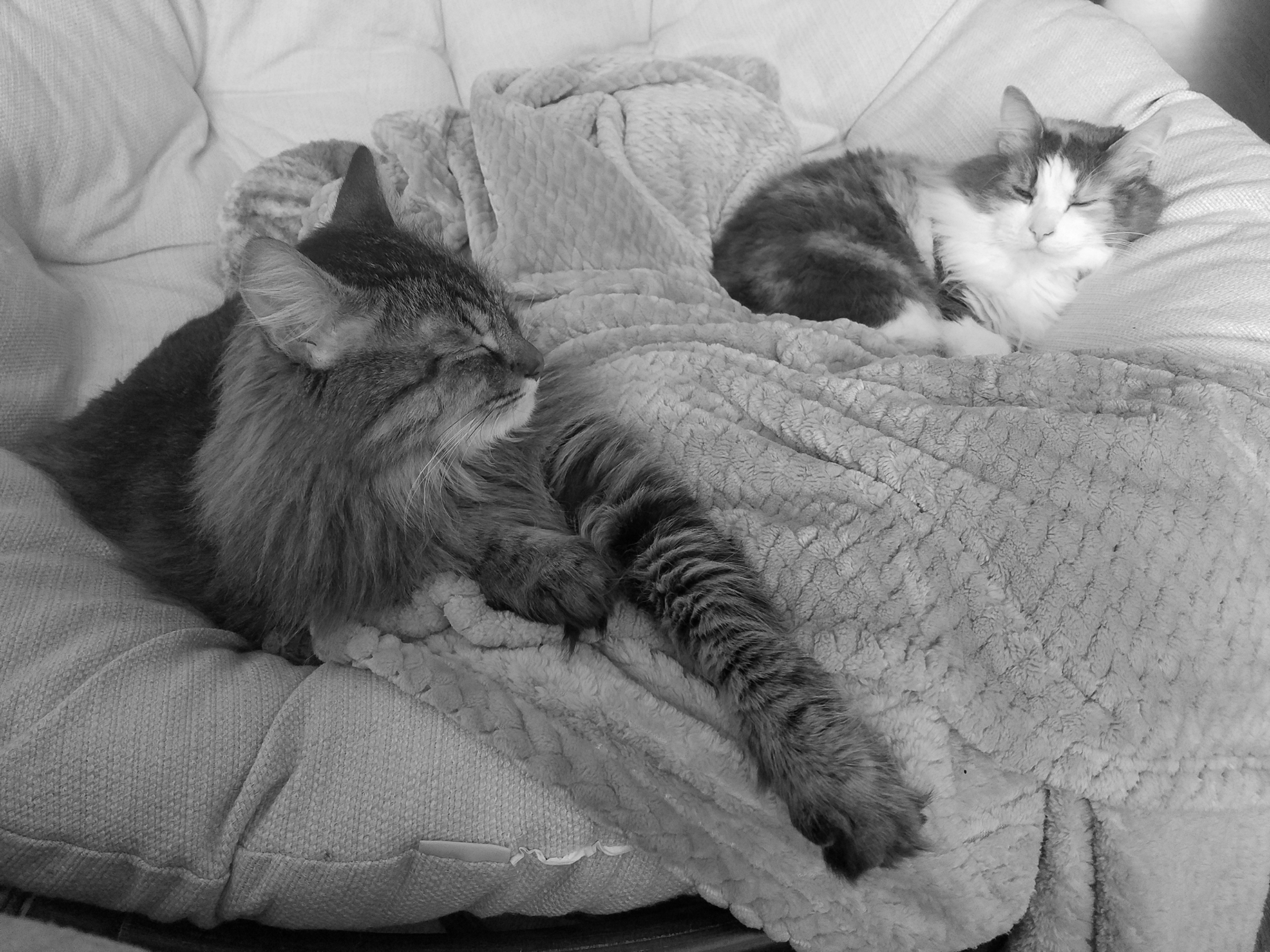 CATS - TOGETHER.jpg
